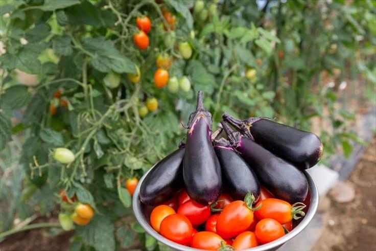 家庭菜園で野菜作り