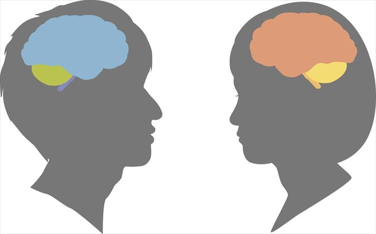 男女脳の違い
